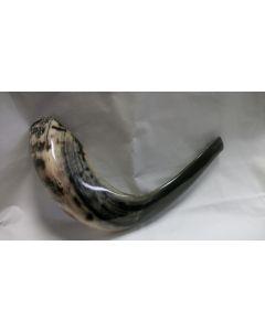 shofar5