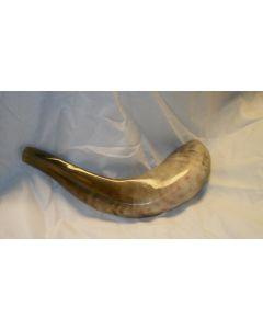 shofar13